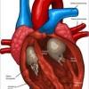 Cum functioneaza inima – Film Video Prezentare