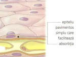 MEMBRANELE – Anatomia celulelor umane
