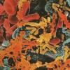 Nitrofurantoin – Medicament Prospect