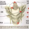 Imagini Coloana Vertebrala – Corpul Uman