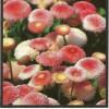 Salate cu puteri vindecatoare – Tratamente Naturiste