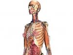 Corpul uman 3D