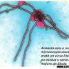 Febrele hemoragice virale