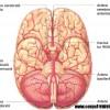 Atacul cerebral