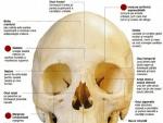 Craniul Uman