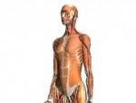 Ce nu stiati despre corpul uman
