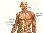 Curiozitati – corpul uman – Partea a II-a