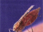 Raspandirea infectiilor