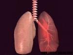 Plamanii – structura si vascularizatia lor