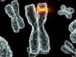 Despre cromozomi – tipuri si specificatii