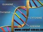 Identitatea moleculara a persoanei – ADN-ul