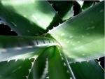 Cum se usuca si se pastreaza plantele medicinale