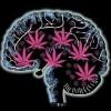 Ce ar putea sa pateasca barbatii care fumeaza marijuana?