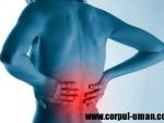 Tratament naturist pentru durerile de spate