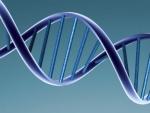 ADN artificial – Acum este posibil