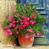 Care sunt plantele pe care nu ar trebui sa le dorim langa noi?