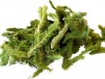 Pedicuta, planta care este un remediu pentru reumatism si artrita
