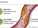 Importanta colesterolului bun in lupta impotriva cancerului