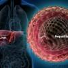 Cum te afecteaza virusurile hepatice?