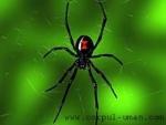Paianjenii care au capacitatea de a preveni malaria