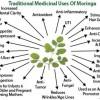 Moringa si avantajele sale uimitoare pentru sanatatea ta