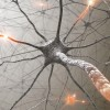 Cum iti poti ajuta organismul sa regenereze neuronii