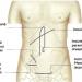 Corpul uman organe interne