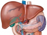 Corpul uman ficatul