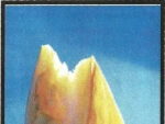 Uleiul de dovleac, un excelent vermifug