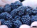 Care sunt fructele sanatoase ale toamnei?