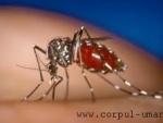 S-a descoperit un nou vaccin contra malariei?