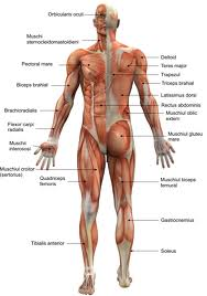 Ciupit dureri de spate