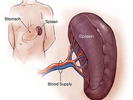 cantitatea de sange din corpul uman