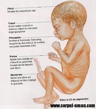 prima luna sarcina