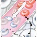 Circuitul oxigenului