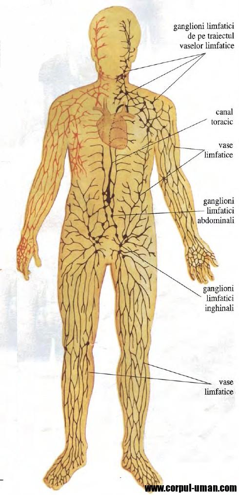 Categorie:Boli ale sistemului reproducător - Wikipedia