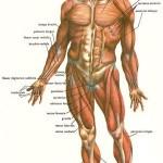 Curiozitati - corpul uman