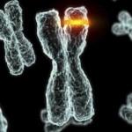 Cromozomi