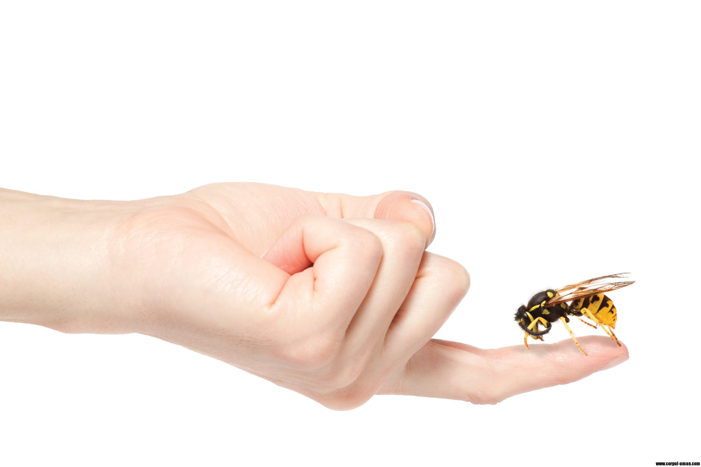 Что делать, если укусила оса или пчела 57