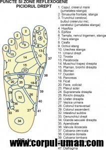Presopunctura piciorul drept