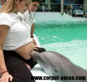 Sunete de delfini