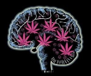 Marijuana - efecte