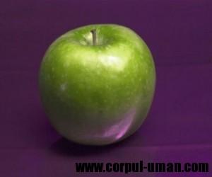 Dieta cu mere - cura de slabire