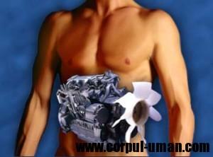 Cresterea metabolsimului