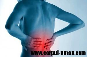 Remedii naturiste dureri de spate