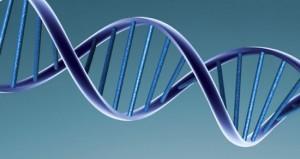 ADN artificial