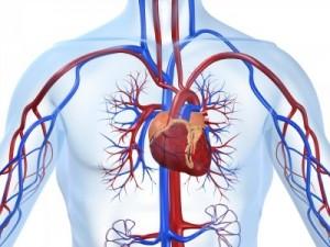 Afectiuni cardiovasculare