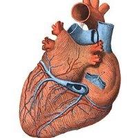 Probleme cardice - ruscuta
