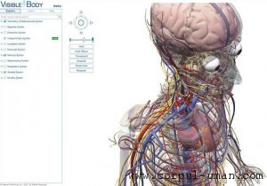 Corpul uman - calitati