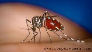 Vaccin contra malariei